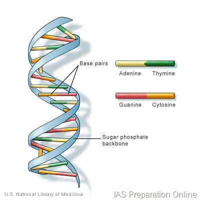 Dna ias preparation online dna is a long molecule for example a typical bacterium like e coli has one dna molecule with about 3000 genes a gene is a specific sequence of dna malvernweather Images