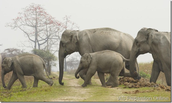 Asian_Elephant_8.13.2012_Why_They_Matter3_HI_246040
