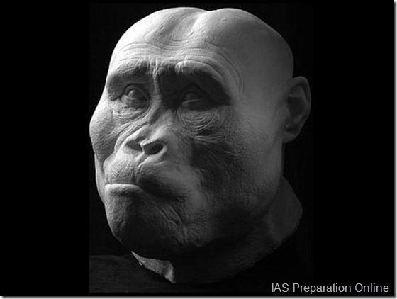 early-human-ancestors-faces1-515x388