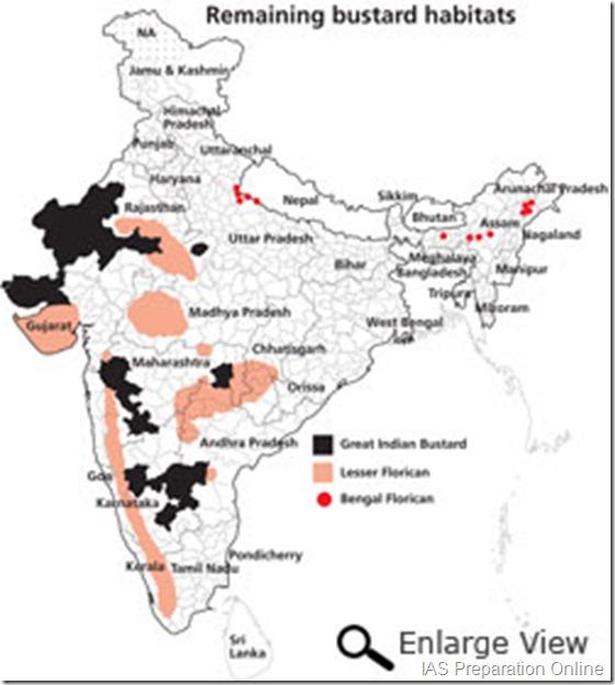 India-bustard-bird-t(1)